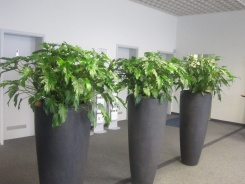 Polystone Partner bepflanzt mit Philodendron
