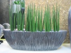 River Oval Alu mit Sansevieria cylindrica